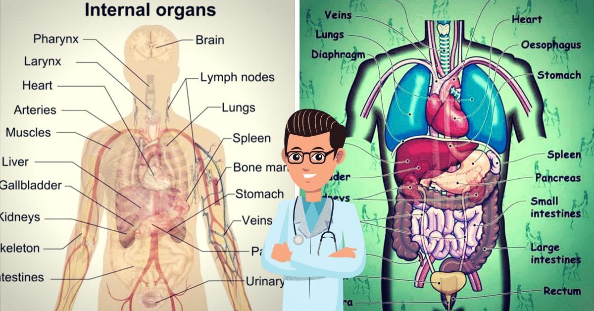 dictionary organs