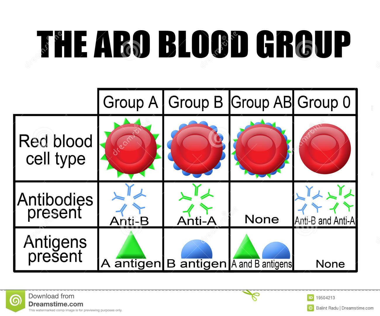 abo blood group test pdf